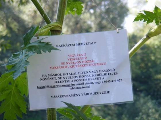FIGYELEM !!! ÚJ Mérgező növény hazánkban! Oszd meg te is mert nagyon fontos!