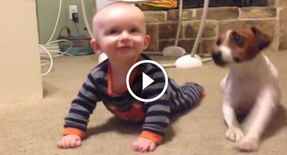 Kisbaba legjobb barátjától, a kutyusuktól tanul meg mászni! Létezik ennél cukibb videó