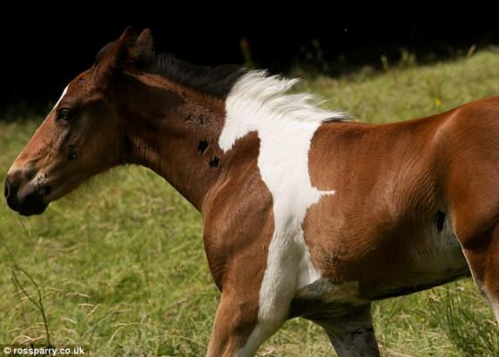 horse-marking